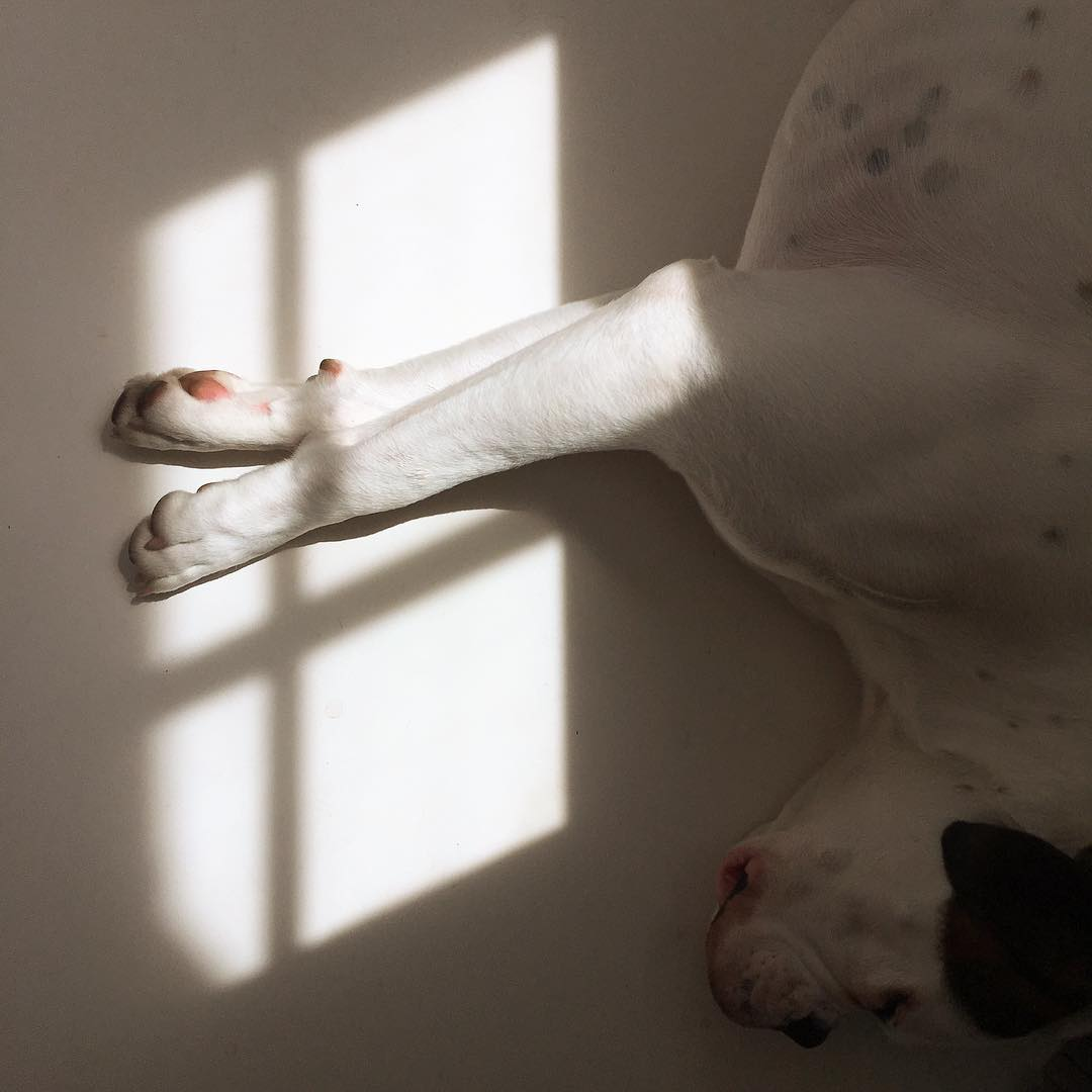 Freshly cut dog nails on paws in sunlight
