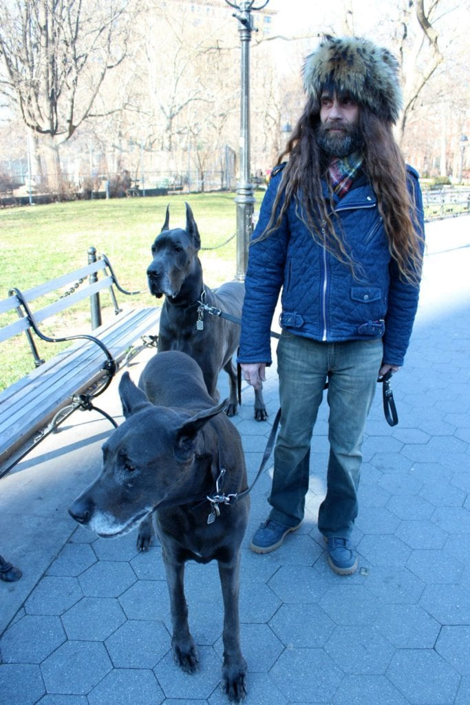 Great Dane dogs and owner in NYC