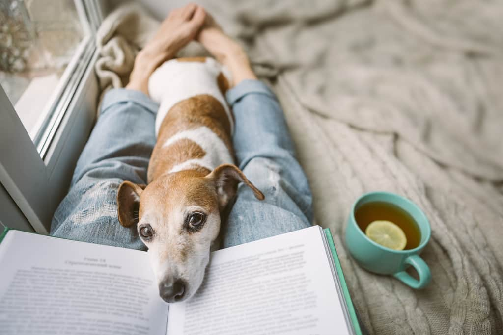 Dog lover reads a book about dogs