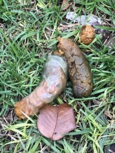 Mucousy dog poop