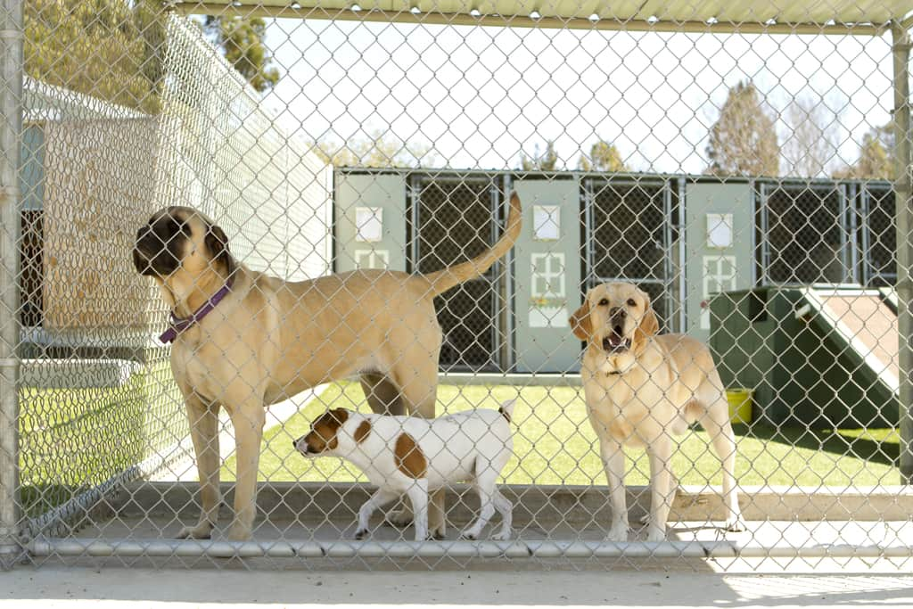 Dogs behind a fence at a boarding facility
